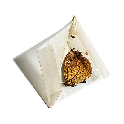 Schmetterlinge von einer Sammlung, Insekten - p1316m1161142 von Robert Striegl