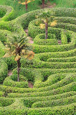 Glendurgan Garden, Cornwall - p977m934728 by Sandrine Pic