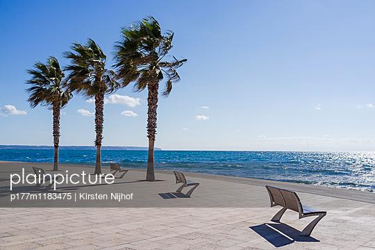 Palmen mit Sitzbänken auf Mallorca - p177m1183475 von Kirsten Nijhof