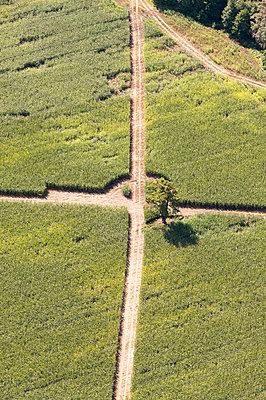 Weg im Maisfeld - p1079m2152580 von Ulrich Mertens