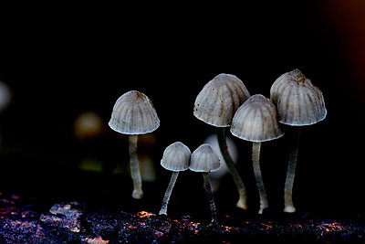A Mushroom Forest Outdoor Macro Photgraphy - p1166m2262023 by Cavan Images