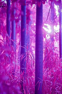 Infrared, Trees and plants - p1487m2150176 by Ludovic Mornand
