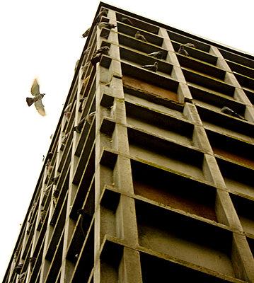 Taubenhaus - p4320962 von mia takahara
