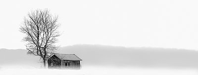 House and bare tree in snowy landscape - p555m1454224 by Chris Clor
