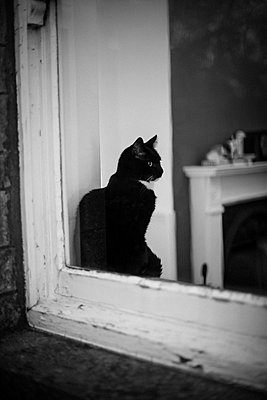 Black cat sitting on window sill - p1433m2124782 by Wolf Kettler