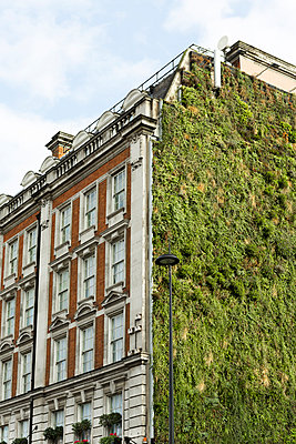 Living wall - p248m1004045 by BY