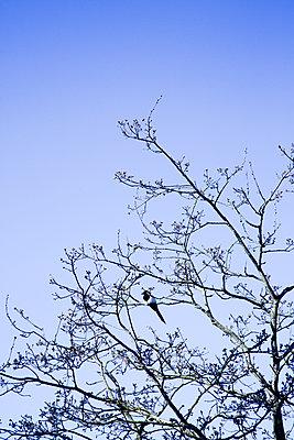 Vogel sitzt auf einem Ast im Frühlingsbaum - p606m1573164 von Iris Friedrich