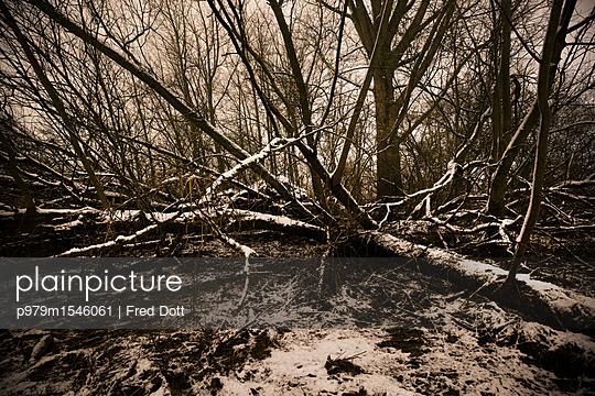 p979m1546061 by Fred Dott