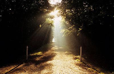 Sonne im Wald - p3050088 von Dirk Morla