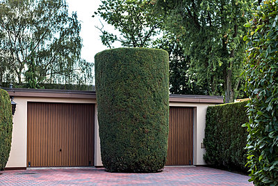 Huge conifer in front of garage door - p229m1475516 by Martin Langer