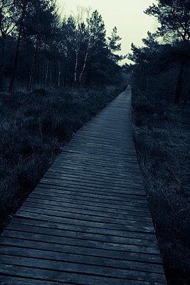Weg im Tiefmoor - p299m1110921 von Silke Heyer