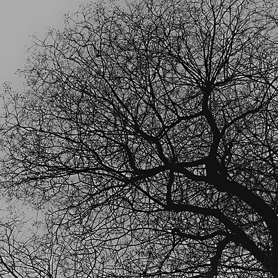 Tree - p1240m2063313 by Adeline Spengler