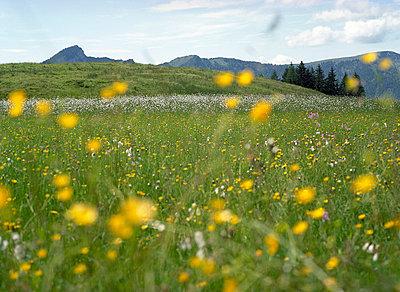 Tirol;  Kaiserwinkl - p6060396 von Iris Friedrich