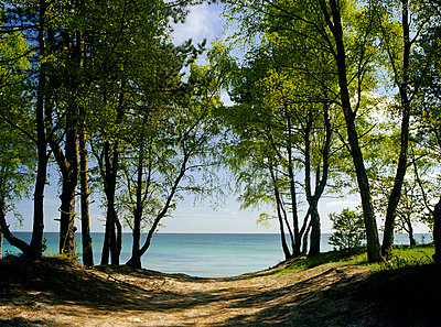 Sea and birches at the beach. ... Sterle - p972m1056404 by Gerry Johansson