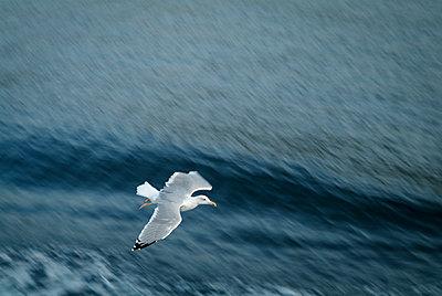 Seagull - p1170m1559023 by Bjanka Kadic