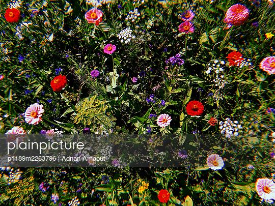 Flowering perennials - p1189m2263796 by Adnan Arnaout