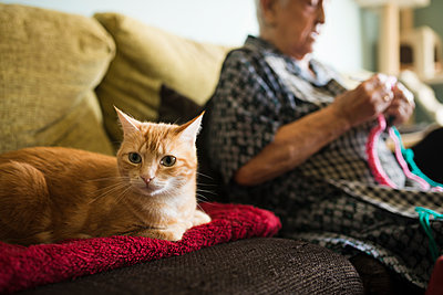 Portrait of cat on the couch with senior woman crocheting in the background - p300m2030042 von Ramon Espelt