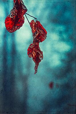 Wet autumn beech leaves in Wuppertal, Germany - p300m2281616 by Dirk Wüstenhagen