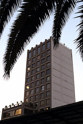 High-rise with palm tree in the foreground - p1063m1538366 by Ekaterina Vasilyeva