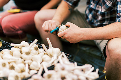 Two young farmers processing their dried garlic harvest - p1166m2207902 by Cavan Images
