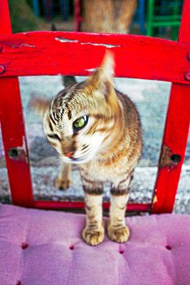 Katze schüttelt sich - p1271m1481215 von Maurice Kohl