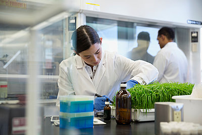 Scientist examining GMO plants in laboratory - p1192m1145630 by Hero Images