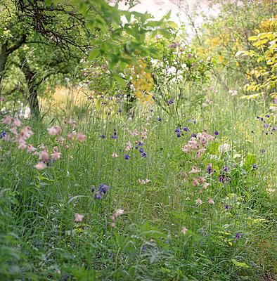 Flower field - p4410273 by Maria Dorner