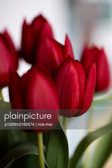 Bunch of tulips, close-up - p1229m2182574 by noa-mar