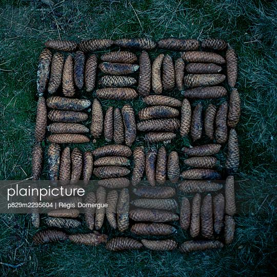 Pine cones in a square - p829m2295604 by Régis Domergue