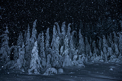 Scenic view of snow covered trees during night - p1166m1486064 by Cavan Images