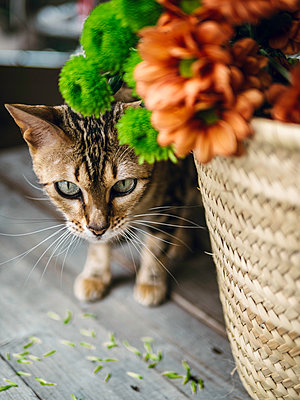 Cat beside shopping basket - p1522m2093455 by Almag