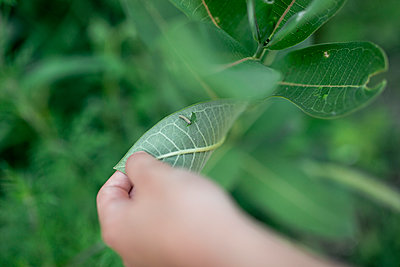 Cropped hand of boy holding leaf with caterpillar at backyard - p1166m2025406 by Cavan Images