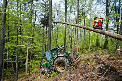 Ein man beim Sägen, Maibaum, Sindelsdorf, Weilheim-Schongau, Bayerisches Oberland, Oberbayern, Bayern, Deutschland - p1316m1160476 von Peter von Felbert