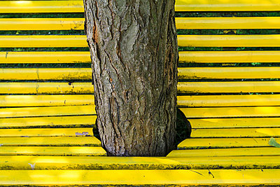 Urban Tree - p417m2076095 by Pat Meise