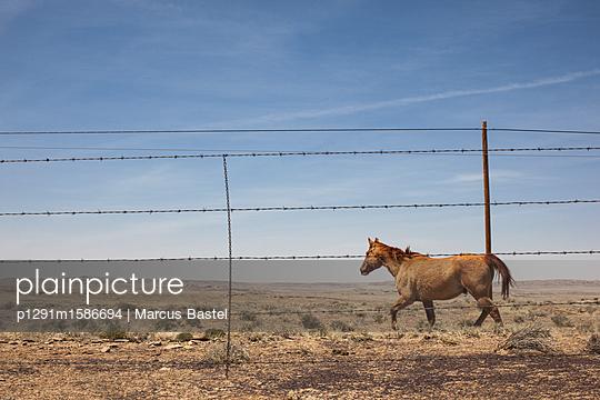 Pferd - p1291m1586694 von Marcus Bastel