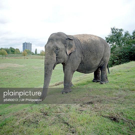 Elefant   - p5450013 von Ulf Philipowski