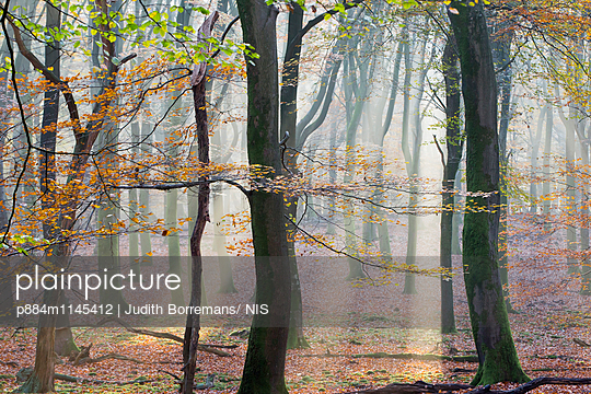 p884m1145412 von Judith Borremans/ NIS