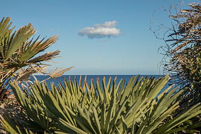 Meer hinter den Palmen - p1021m2142971 von MORA