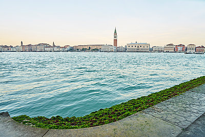 Venice seen from shore with algae - p1312m1575219 by Axel Killian