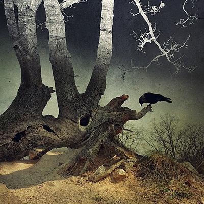 On Dark Wings Part VII - p1633m2209005 by Bernd Webler