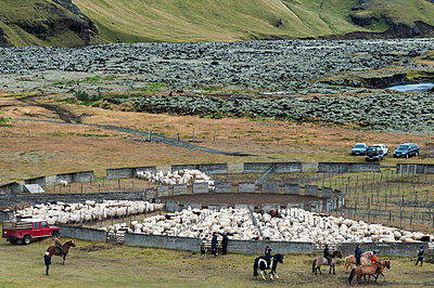 Iceland, bringing down the cattle from the mountain pasture - p300m1032849 by Kerstin Bittner