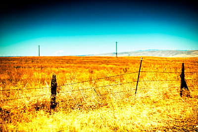 Golden Meadow and Barbed Wire Fence - p694m2218855 by Justin Hill photography