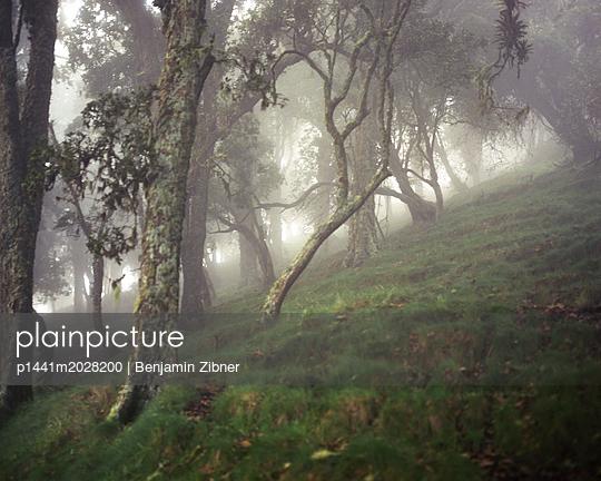 Nebel - p1441m2028200 von Benjamin Zibner