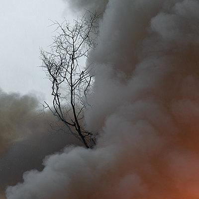 Volcán de Fuego, clouds of smoke, Guatemala - p1624m2195960 by Gabriela Torres Ruiz