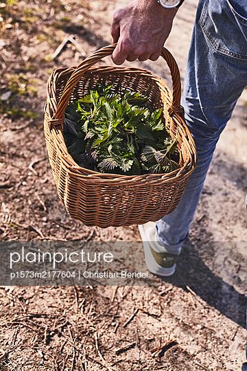 Stinging nettle harvest - p1573m2177604 by Christian Bendel