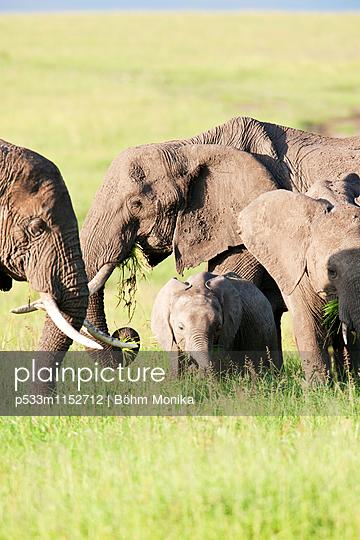 Elefantenfamilie - p533m1152712 von Böhm Monika