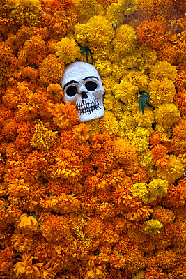 Calavera Head Among Marigolds for Day of the Dead - p1248m2210903 by miguel sobreira