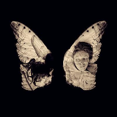 Sleeping on Wings - p1636m2216310 by Raina Anderson