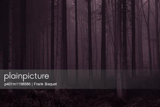 Dunkler Wald - p401m1198586 von Frank Baquet
