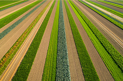 Fields with various useful plants, drone photography - p1132m2215528 by Mischa Keijser